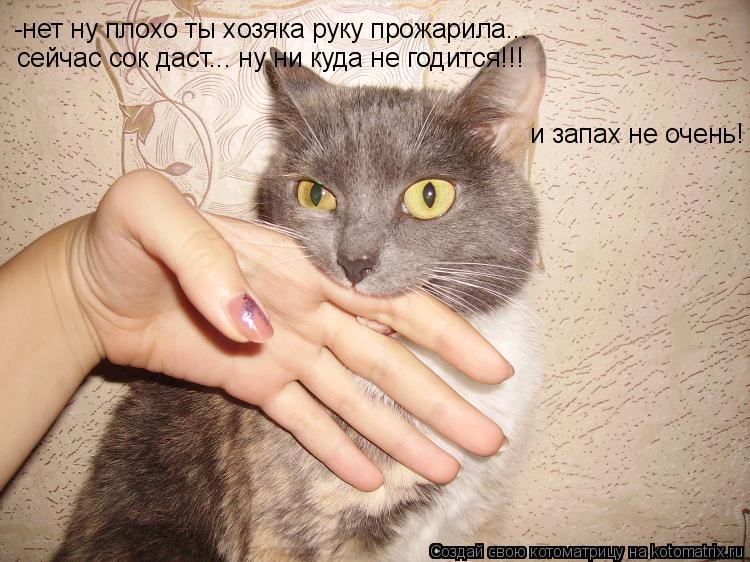 Котоматрица: -нет ну плохо ты хозяка руку прожарила... сейчас сок даст... ну ни куда не годится!!! и запах не очень!