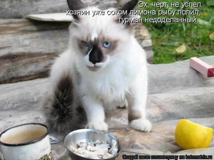 Котоматрица: Эх, черт, не успел, хозяин уже соком лимона рыбу полил, гурман недоделанный