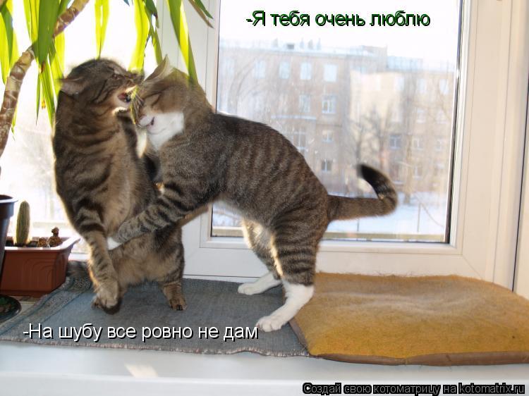 Котоматрица: -Я тебя очень люблю -На шубу все ровно не дам