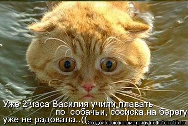 Котоматрица: Уже 2 часа Василия учили плавать по  собачьи, сосиска на берегу  уже не радовала..((