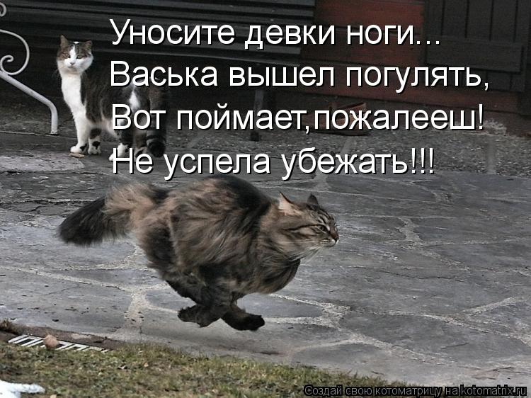 Котоматрица: Уносите девки ноги... Васька вышел погулять, Вот поймает,пожалееш! Не успела убежать!!!