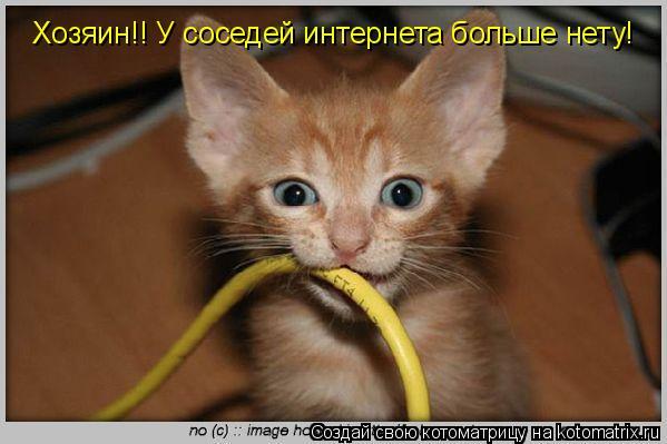 Котоматрица: Хозяин!! У соседей интернета больше нету!