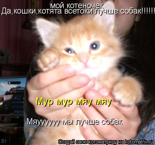 Котоматрица: мой котеночек Да,кошки,котята всетоки лучше собак!!!!!!!!!!!!!!! Мяуууууу мы лучше собак Мур мур мяу мяу