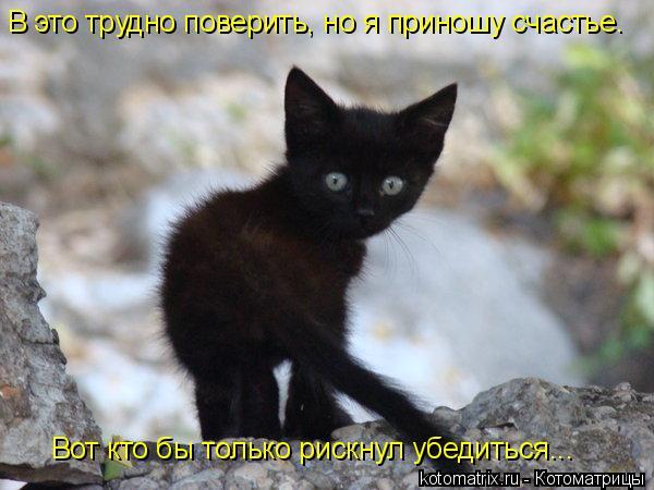 Котоматрица: Вот кто бы только рискнул убедиться... В это трудно поверить, но я приношу счастье.