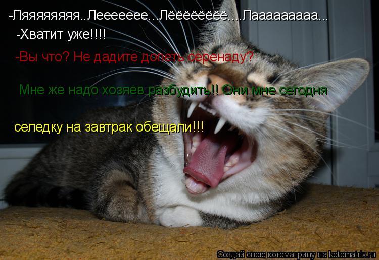 Котоматрица: -Ляяяяяяяя..Леееееее...Лёёёёёёёё....Лааааааааа... -Хватит уже!!!! -Вы что? Не дадите допеть серенаду? Мне же надо хозяев разбудить!! Они мне сегодн