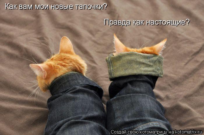 Котоматрица: Как вам мои новые тапочки? Правда как настоящие?