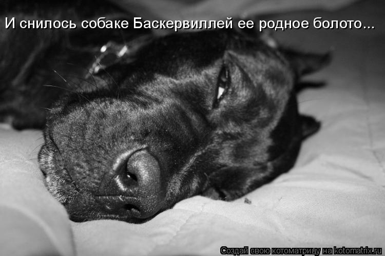Котоматрица: И снилось собаке Баскервиллей ее родное болото...
