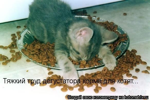 Котоматрица: Тяжкий труд дегустатора корма для котят...