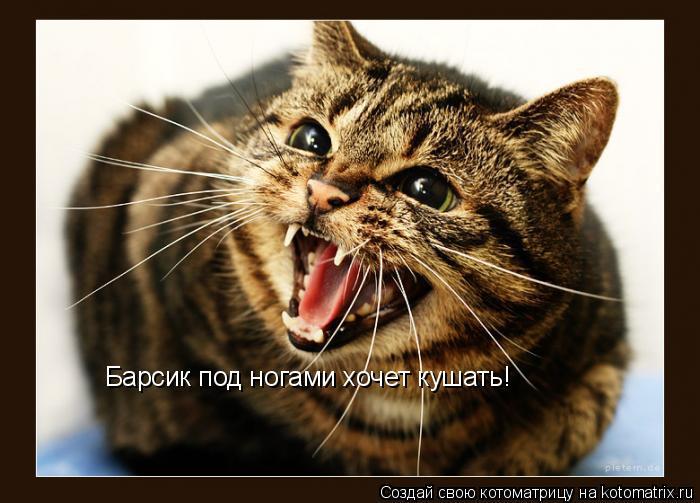 Котоматрица: Барсик под ногами хочет кушать!