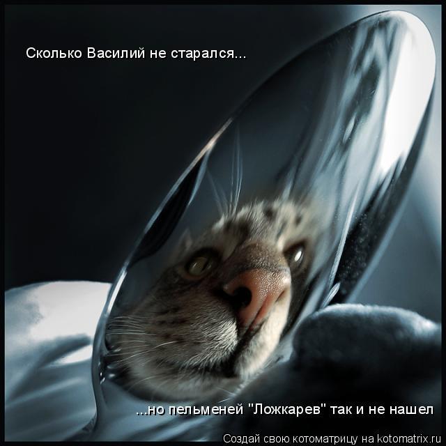 """Котоматрица: Сколько Василий не старался... ...но пельменей """"Ложкарев"""" так и не нашел"""