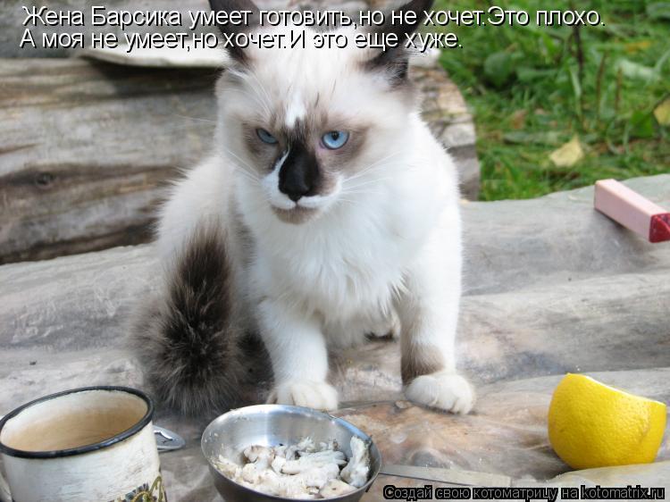 Котоматрица: Жена Барсика умеет готовить,но не хочет.Это плохо. А моя не умеет,но хочет.И это еще хуже.