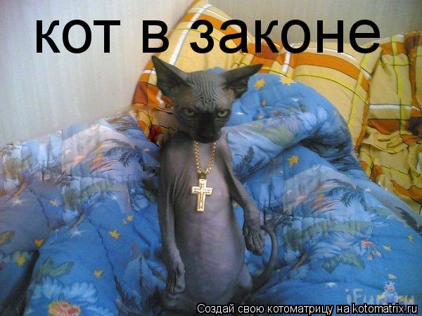 Котоматрица: кот в законе