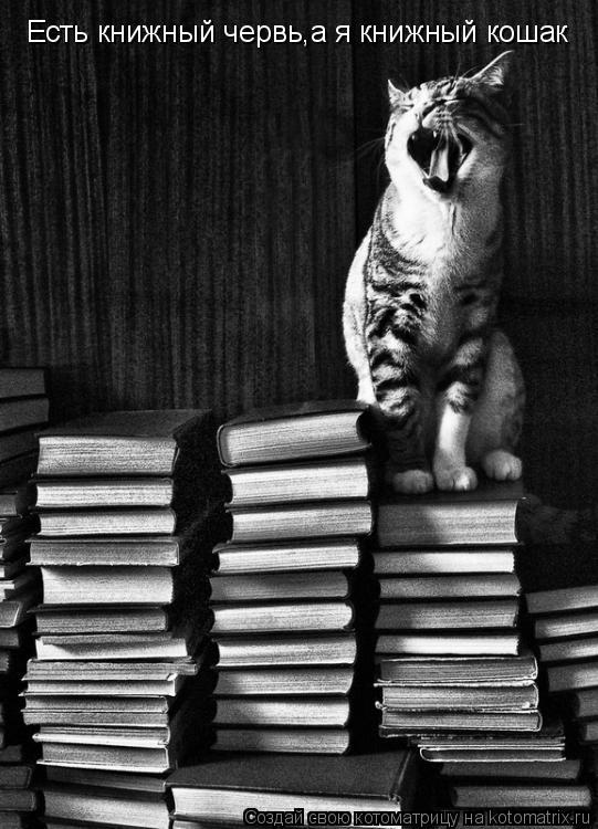 Котоматрица: Есть книжный червь,а я книжный кошак