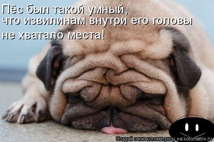 Котоматрица: Пёс был такой умный,  что извилинам внутри его головы  не хватало места!