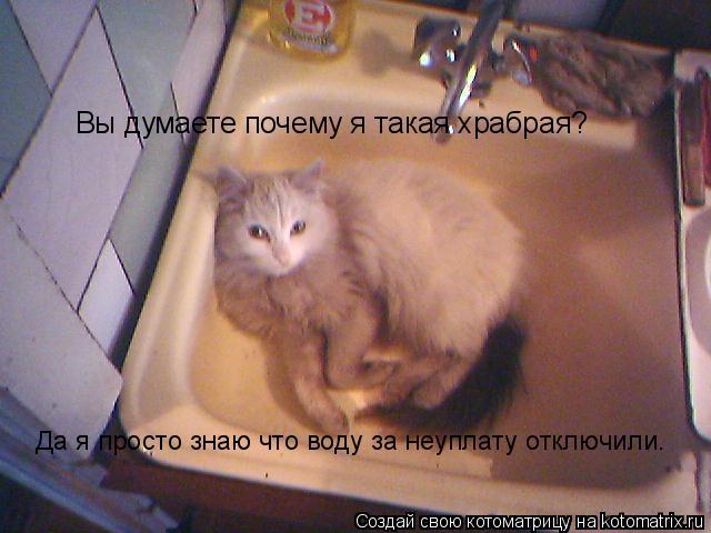 Котоматрица: Вы думаете почему я такая храбрая? Да я просто знаю что воду за неуплату отключили.