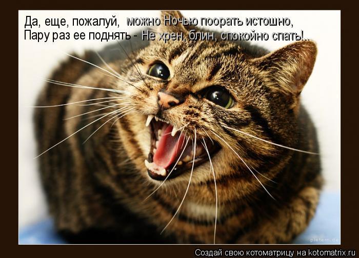 Котоматрица: Да, еще, пожалуй,  можно Ночью поорать истошно,  Пару раз ее поднять -  Не хрен, блин, спокойно спать!..