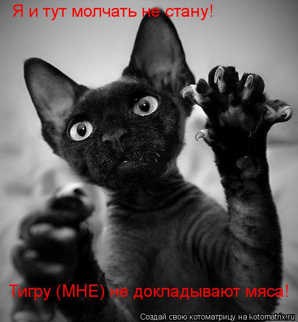 Котоматрица: Я и тут молчать не стану! Тигру (МНЕ) не докладывают мяса!