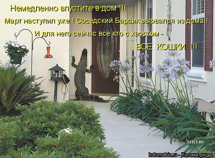 Котоматрица: Немедленно впустите в дом !!! Март наступил уже ! Соседский Барсик вырвался из дома ! И для него сейчас все кто с хвостом - ВСЕ  КОШКИ  !!!
