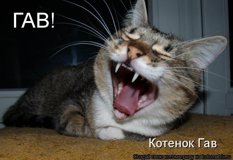 Котоматрица: ГАВ! Котенок Гав
