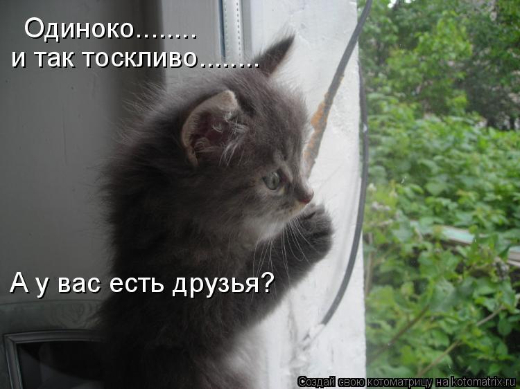 Котоматрица: Одиноко........ и так тоскливо........ А у вас есть друзья?