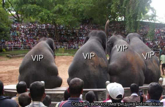 Котоматрица: VIP VIP VIP VIP