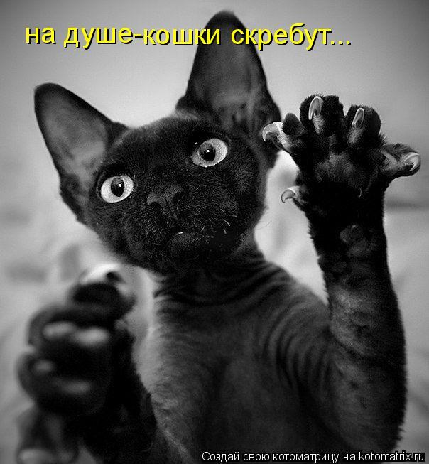Котоматрица: на душе- кошки скребут...