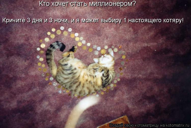 Котоматрица: Кто хочет стать миллионером? Кричите 3 дня и 3 ночи, и я может выбиру 1 настоящего котяру!