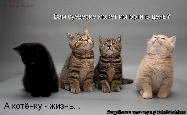 Котоматрица: Вам суеверие может испортить день? А котёнку - жизнь...