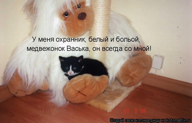 Котоматрица: У меня охранник, белый и больой,  медвежонок Васька, он всегда со мной!