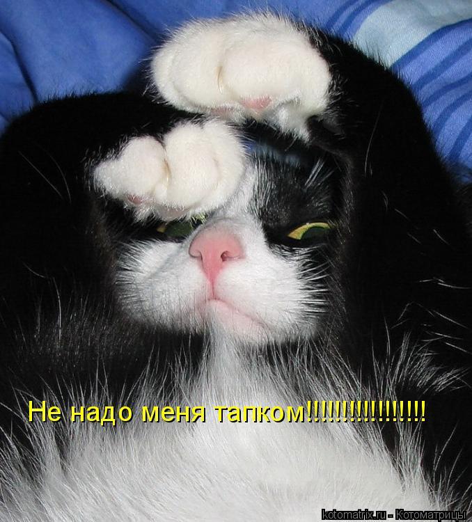Котоматрица: Не надо меня тапком!!!!!!!!!!!!!!!!!