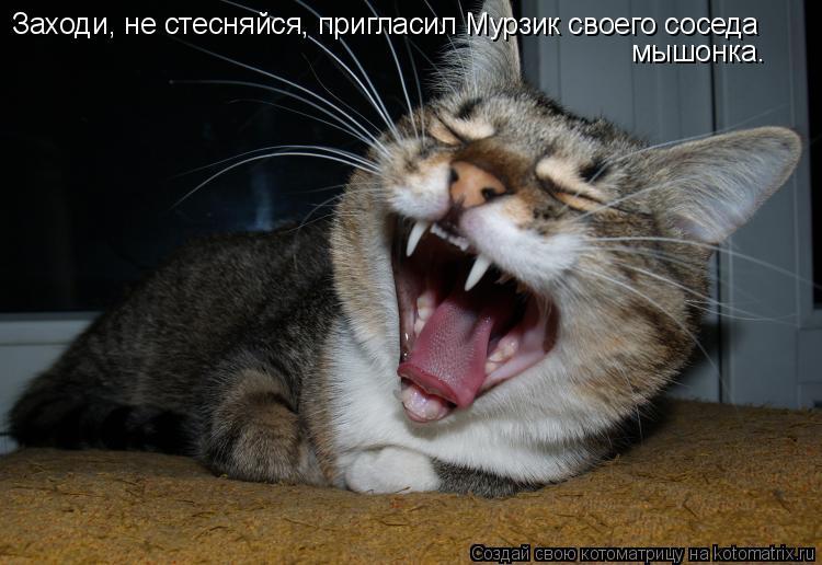 Котоматрица: Заходи, не стесняйся, пригласил Мурзик своего соседа мышонка.