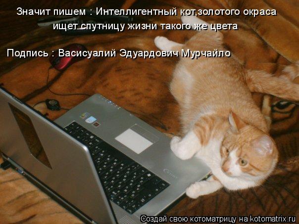 Котоматрица: Значит пишем : Интеллигентный кот,золотого окраса  ищет спутницу жизни такого же цвета Подпись : Васисуалий Эдуардович Мурчайло