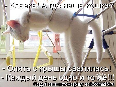 Котоматрица: - Клавка! А где наша кошка? - Опять с крышы свалилась! - Каждый день одно и то же!!!
