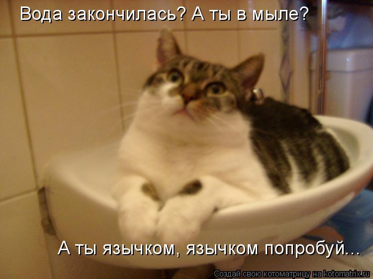 Котоматрица: Вода закончилась? А ты в мыле? А ты язычком, язычком попробуй...