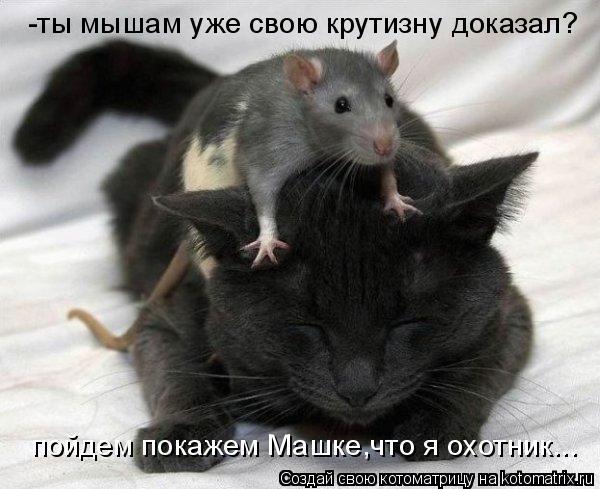 Котоматрица: -ты мышам уже свою крутизну доказал? пойдем покажем Машке,что я охотник...