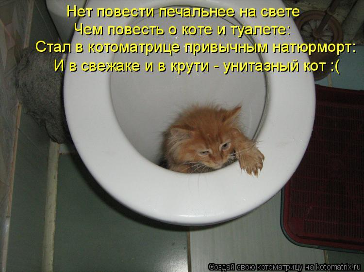 Котоматрица: Нет повести печальнее на свете Чем повесть о коте и туалете: И в свежаке и в крути - унитазный кот :( Стал в котоматрице привычным натюрморт: