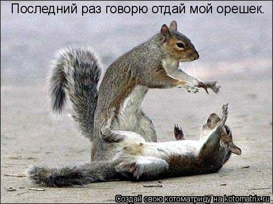 Котоматрица: Последний раз говорю отдай мой орешек.