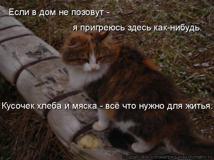 Котоматрица: Если в дом не позовут - я пригреюсь здесь как-нибудь. Кусочек хлеба и мяска - всё что нужно для житья.