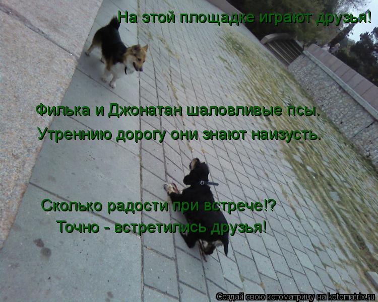 Котоматрица: На этой площадке играют друзья! Филька и Джонатан шаловливые псы. Утреннию дорогу они знают наизусть. Сколько радости при встрече!? Точно - в