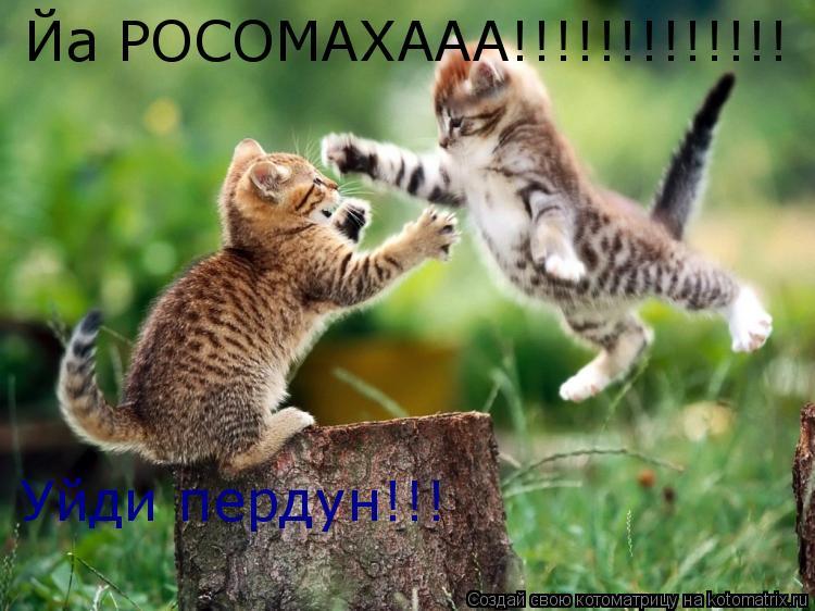Котоматрица: Йа РОСОМАХААА!!!!!!!!!!!!! Уйди пердун!!!