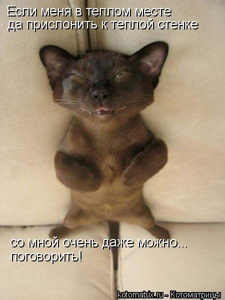 Котоматрица: Если меня в теплом месте да прислонить к теплой стенке со мной очень даже можно... поговорить!