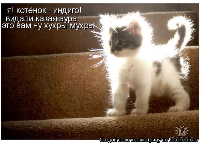 Котоматрица: я! котёнок - индиго!  видали какая аура это вам ну хухры-мухры