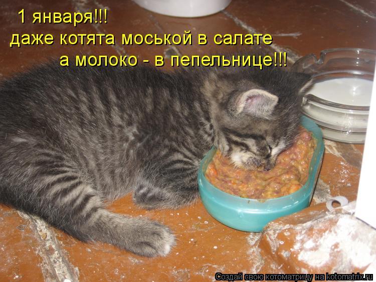 Котоматрица: 1 января!!! даже котята моськой в салате а молоко - в пепельнице!!!
