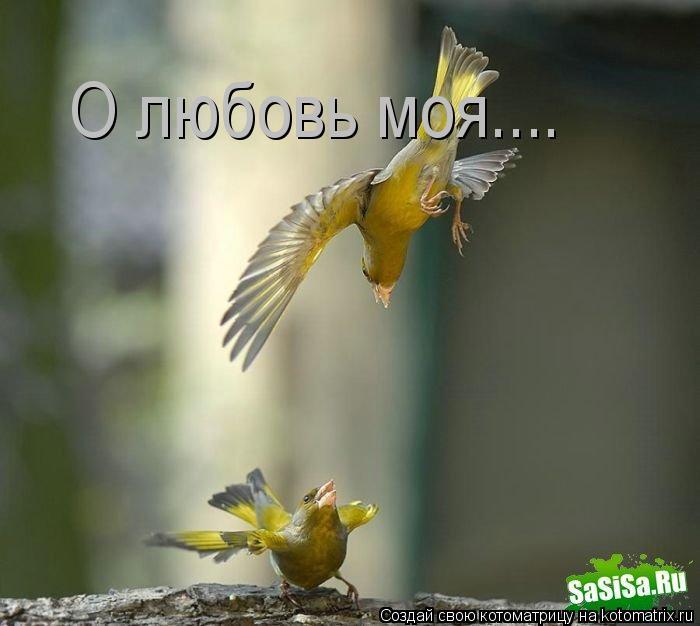 Котоматрица: О любовь моя....