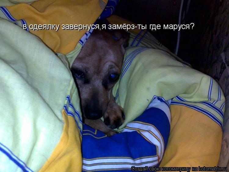 Котоматрица: в одеялку завернуся,я замёрз-ты где маруся?