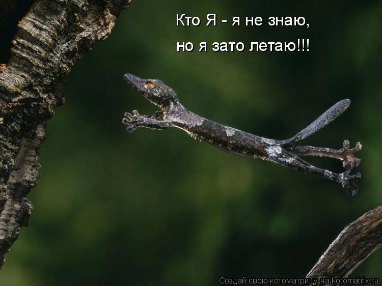 Котоматрица: Кто Я - я не знаю, но я зато летаю!!!