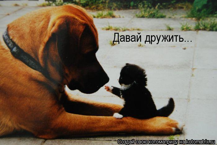 Котоматрица: Давай дружить...