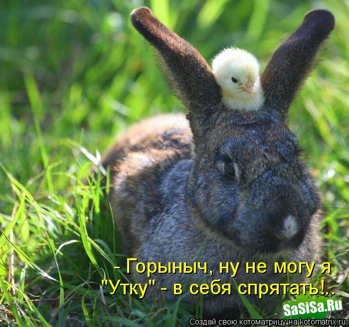 """Котоматрица: - Горыныч, ну не могу я  """"Утку"""" - в себя спрятать!.."""