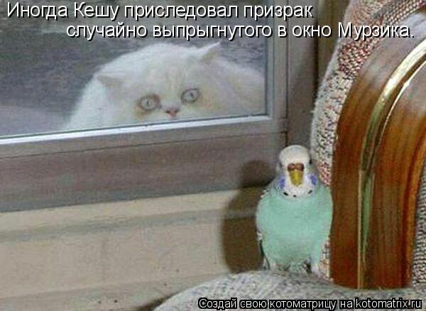 Котоматрица: Иногда Кешу приследовал призрак случайно выпрыгнутого в окно Мурзика.