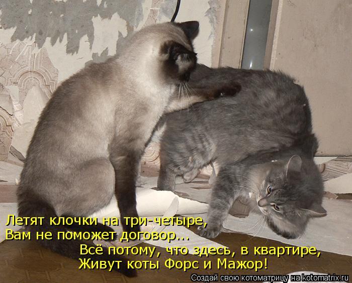 Котоматрица: Летят клочки на три-четыре, Вам не поможет договор... Всё потому, что здесь, в квартире, Живут коты Форс и Мажор!